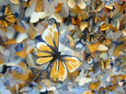 WVC_anthropologie_2014_earth-day_monarch-butterfly_01 (2)