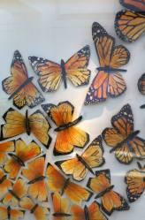WVC_anthropologie_2014_earth-day_monarch-butterfly_01 (8)
